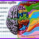 emisferi-cerebrali--Zinzi-Ettore-Psicologo-Psicoterapeuta-Taranto